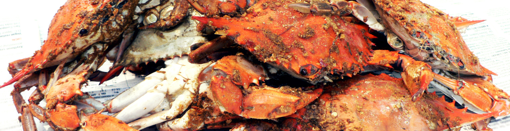 Hard Shell Crabs
